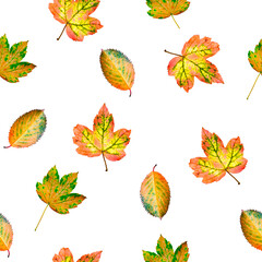 autumn leaves on a white background seamless pattern