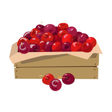 Wooden Box With Cherries. Vector Illustration. Isolated On White Background.