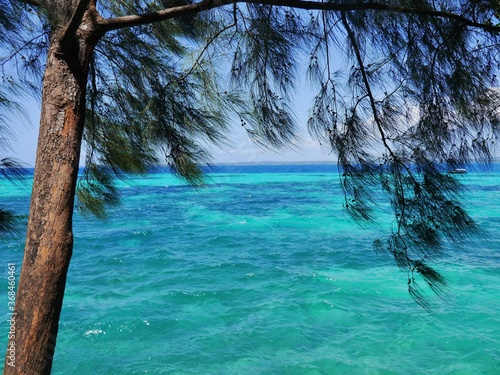 turquoise clear sea with the trees