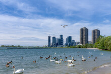 Ontario Lake Shore In Toronto,...