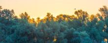 Egret Flying Over Trees Along ...
