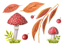 Set Of Two Watercolor Redcap Fly Agarics On Green Grass And Autumn Leaves And Berries. Collection Of Hand-drawn Poisonous Mushrooms And Brown Foliage Isolated On White. Fall In Woods And Forests.
