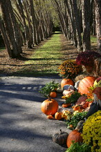 Pumpkin Display In A Park In A...
