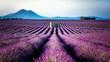 canvas print picture - Mazet dans les champs de lavande