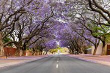 Jacaranda Trees Are Very Beaut...