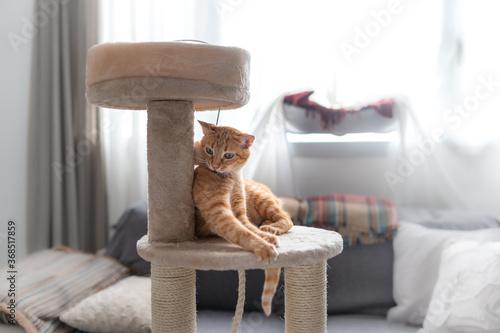 Valokuva gato atigrado de color marron juega en una torre rascador