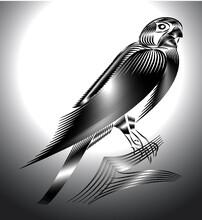 Falcon Line Art Vector New