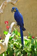 Magnifique Perroquet Bleu