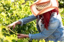 Woman Inspecting Fruit Tree On Farm