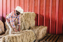Man Moving Hay Bales In Red Barn