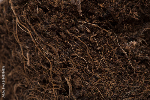 Canvastavla Macro soil texture with small plant roots, growing plants and gardening concept