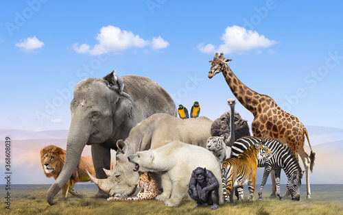 Wild animals group on blue sky background