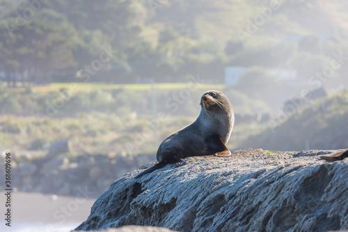 Obraz Seal - fototapety do salonu