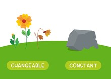 Changeable And Constant Antonyms Word Card Vector Template. Flashcard For English Language Learning. The Stages Of Growth And Wilting Of A Flower And A Stone As Something That Does Not Change.