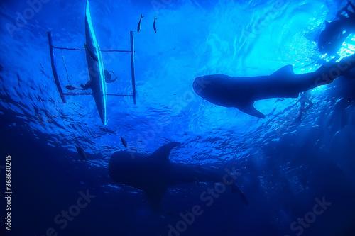 Obraz under water ocean / landscape underwater world, scene blue idyll nature - fototapety do salonu