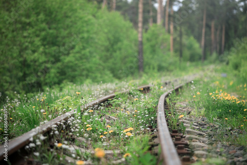 Fototapeta railway in the forest