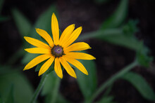 A Single Bloom Of The Flower C...