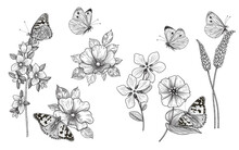 Hand Drawn Monochrome Wildflowers  And Butterflies Set