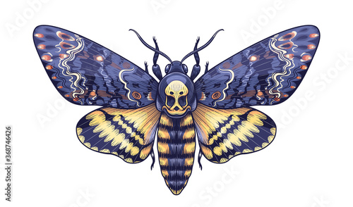Obraz Vector Colored Acherontia Styx Butterfly Isolated on Blank Background. - fototapety do salonu