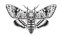 Vector Acherontia Styx Butterfly Isolated