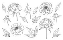Contoured Simple Peony Flowers...