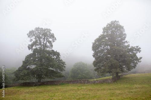 Fotografering Árboles en paisaje con niebla. Cantabria.