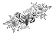 Death's-Head Hawk Moth With Peonies