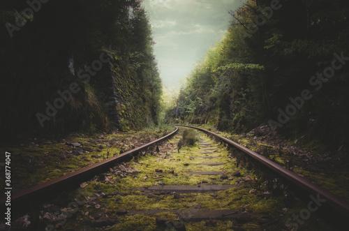 Fototapeta Stillgelegtes Schienengleis im Wald
