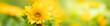 Leinwandbild Motiv Nature of flower in garden using as background natural cover page