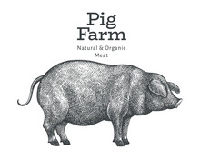 Hand Drawn Farm Animal Illustr...