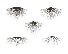 Collection Of Fibrous Root And Tap Roots Of The Tree Vector Isolated On White Background.