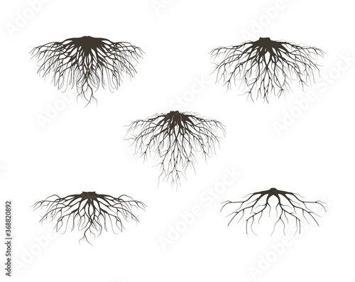 Obraz collection of fibrous root and tap roots of the tree vector isolated on white background. - fototapety do salonu