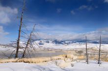 Dead Trees And Travertine Terraces At Canary Spring In Winter At Mammoth Hot Springs Yellowstone National Park
