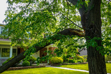 A Broken Tree Limb Separated From The Trunk Hangs Down Over A Green Lawn In Front Of A House After A Severe Storm