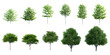Set of  3D Green Trees Isolated on white background , Use for visualization in architectural design