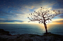 Crows On Dry Tree During Sunse...