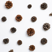 Autumn Dry Pine Cones On White Background. Flat Lay, Top View