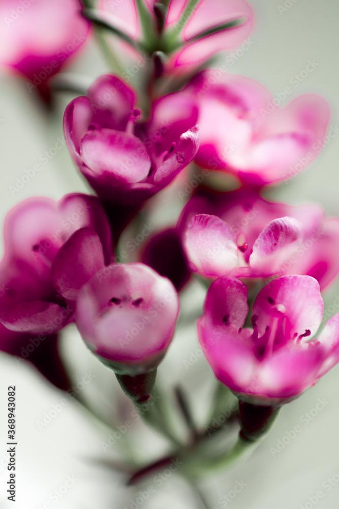 Fototapeta piękne różowe kwiaty