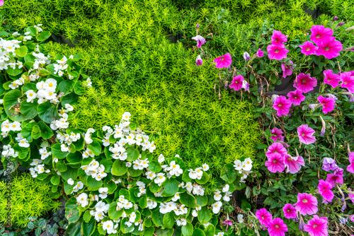 Background material of flowers and plants wall.. Canvas Print