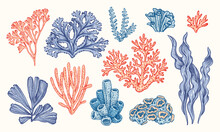 Corals And Seaweed. Vector Hand Drawn. Sketch Botanical Illustration. Underwater Flora, Sea Plants. Line Art Clipart. Vintage Pink And Blue Marine Plants