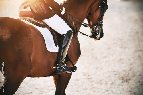 A strong, athletic Bay horse with a rider in the saddle canters quickly across the sand, illuminated by the sunlight Canvas-taulu