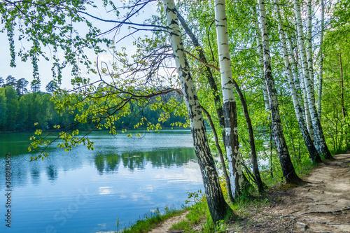 Fotografia, Obraz Line of birches growing near by lake or river