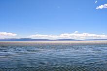 El Calafate Laguna Nimez Inter...