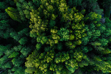An Aerial Of A Lush Summery Mi...