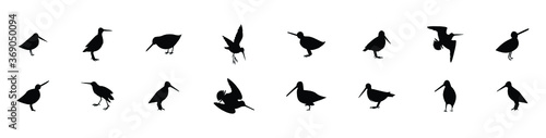 a set of common snipe drum silhouettes. vector illustration Canvas Print