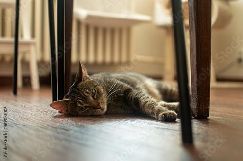 Foto cat on the floor