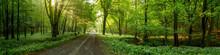 Road Among The Trees Illuminat...