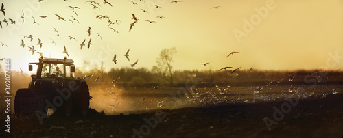 Fototapeta Stado mew latające za traktorem pracującym w polu obraz