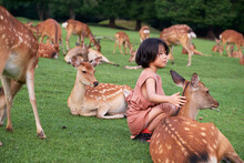 Asian Little Girl With Sika Deer, In Nara, Japan