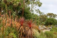 Lush Exotic Garden In Summer